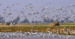 Gharana Wetland