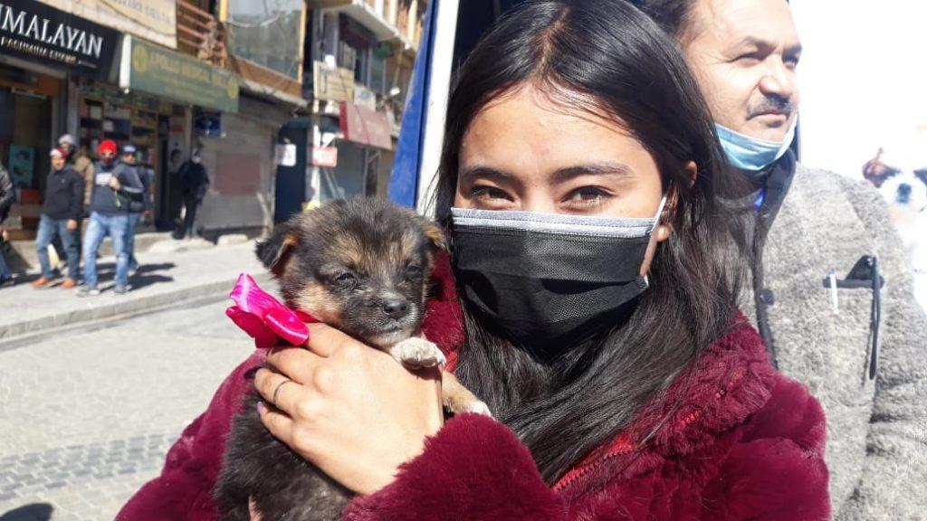 stray dog leh ladakh